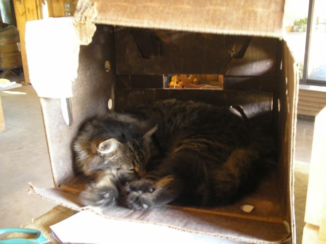 cat -in -the -box